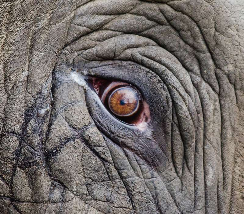 E' raro vedere gli elefanti piangere