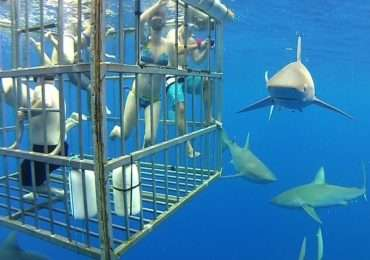 Attacchi di squali e pesca incontrollata: chi è il maggior predatore tra squalo e uomo?
