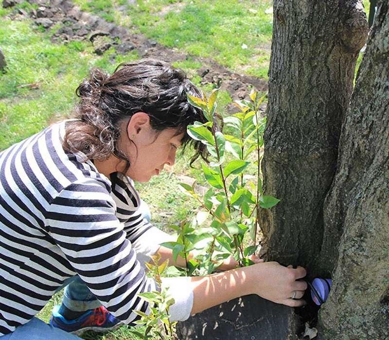 ListenTree, una tecnologia che permette di trasformare gli alberi in altoparlanti.