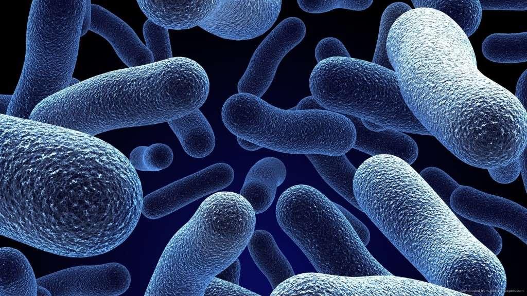 Una barba lunga contiene gli stessi microbi che troviamo sulla nostra pelle del viso normalmente, ma in numero maggiore