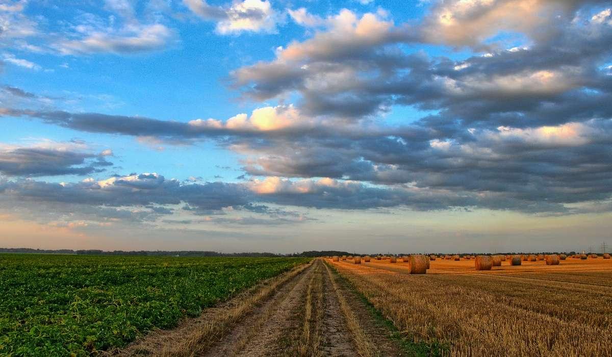 Quanta acqua, in percentuale a quella prelevata da risorse naturali, viene utilizzata in tutto il mondo per l'agricoltura?