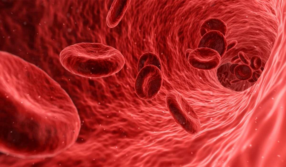 Quanto impiega in media una goccia di sangue per fare il giro del nostro corpo?