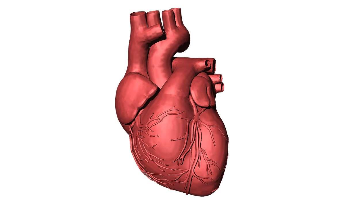 In quanto tempo il cuore pompa 7.5 milioni di litri di sangue?