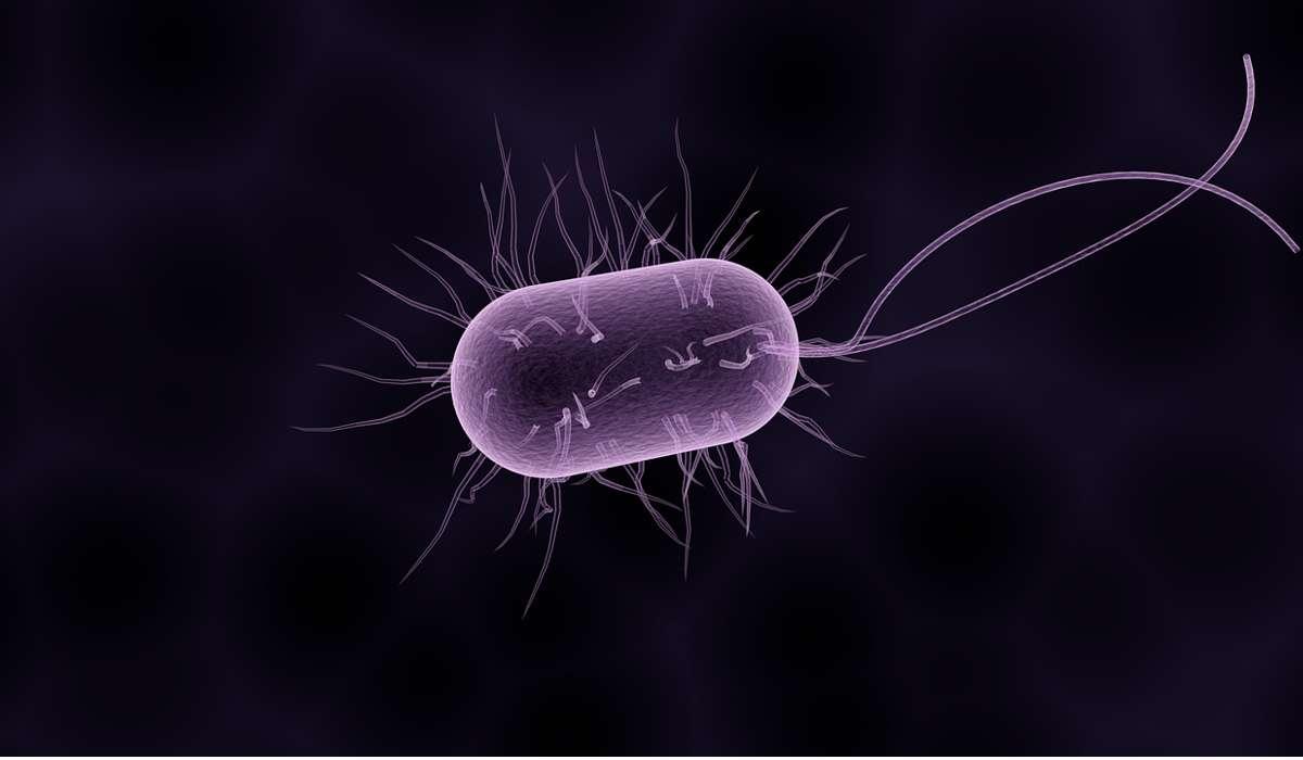 Al numero che compare sulla bilancia contribuiscono anche i batteri all'interno del corpo. Quanto pesano complessivamente?