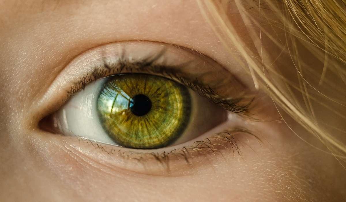 Il peso dell'occhio varia tra quali intervalli?
