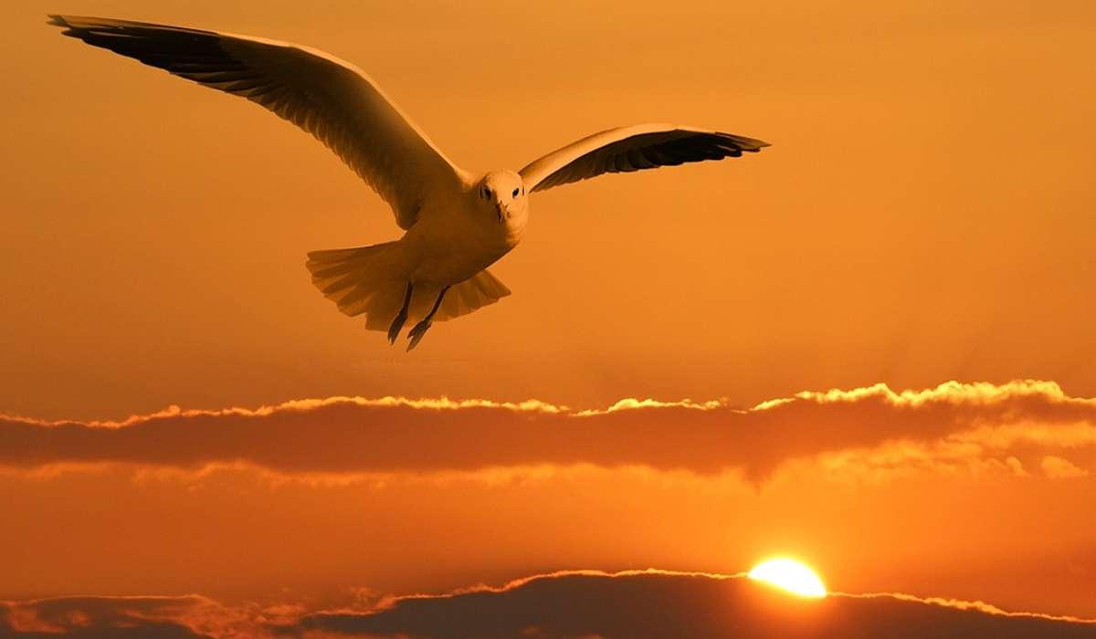 In quale era geologica si sono evoluti gli uccelli?