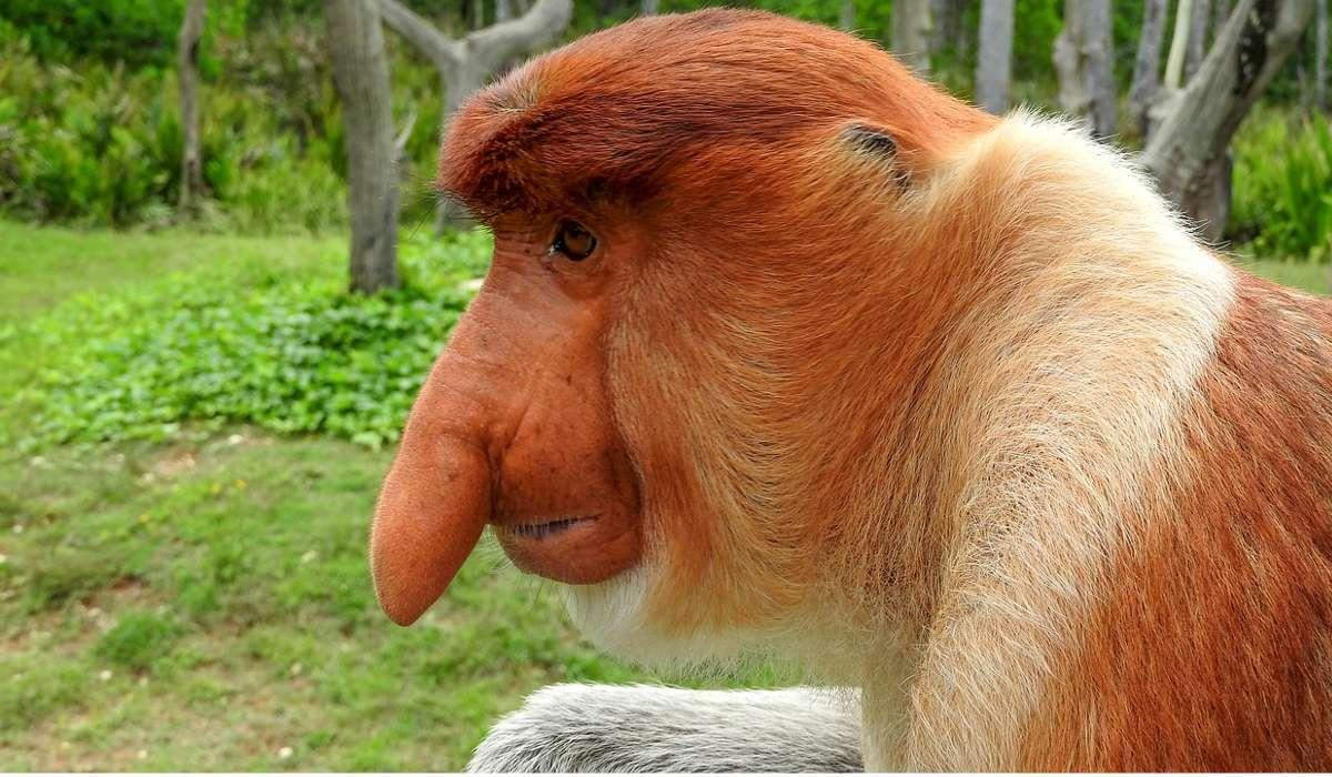 Come si chiama questo animale?