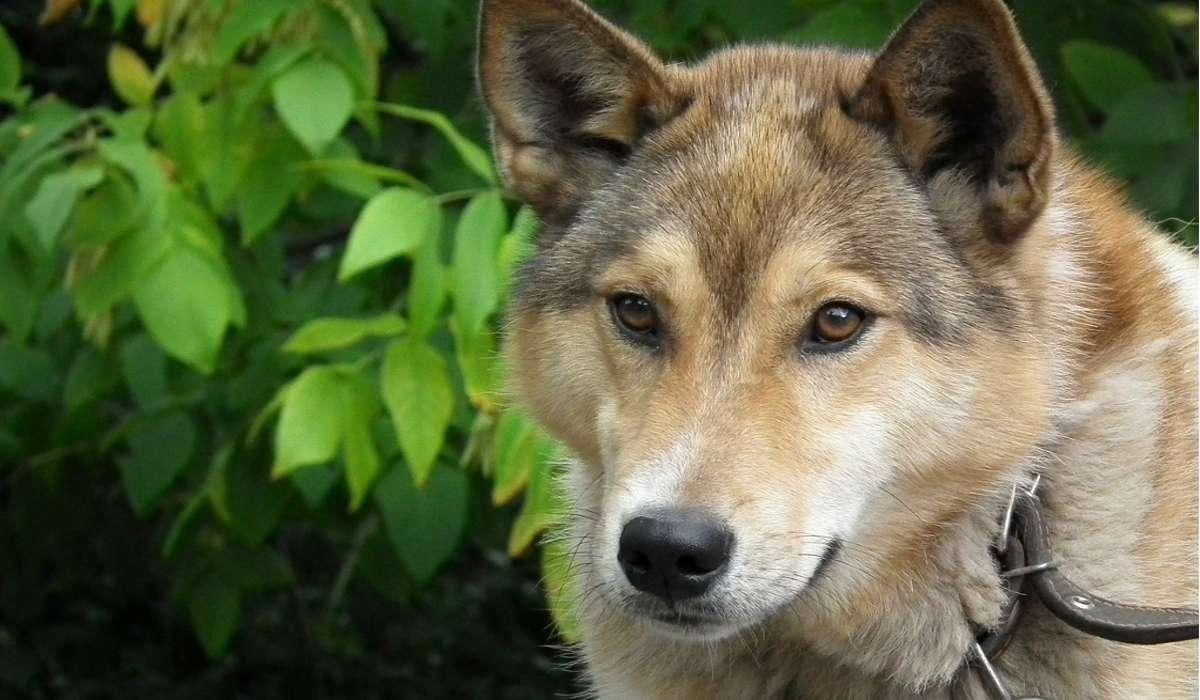 Con quale nome è noto il primo cane mandato nello spazio?