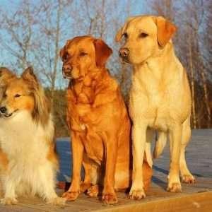 Estroversione, socialità e tendenza a pensare dentro gli schemi sarebbero tratti tipici del profilo psicologico di un amante dei cani.
