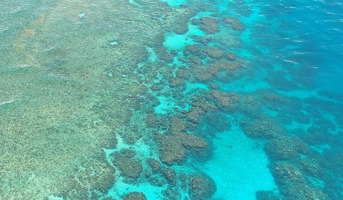 Dove si trova la più grande barriera corallina?