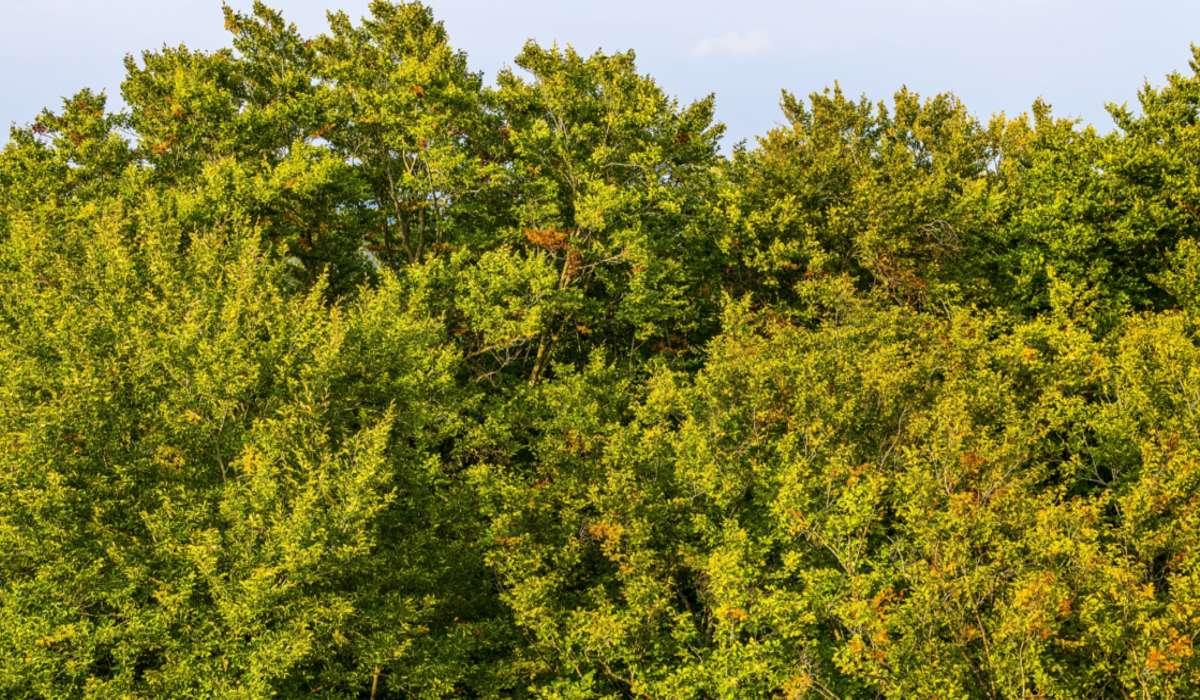 Dove gli alberi perdono le foglie durante la stagione secca?