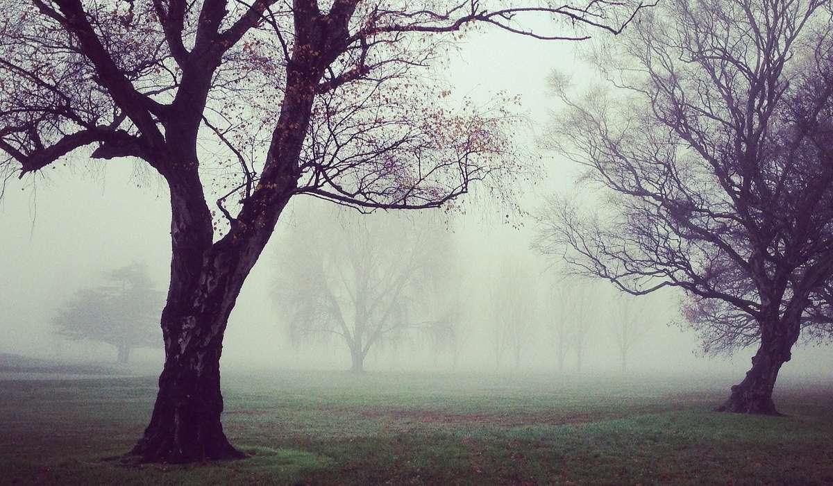 Le foreste umide e caratterizzate dall'esser coperte in modo persistente da una cortina di nuvole a bassa quota, vengono dette?