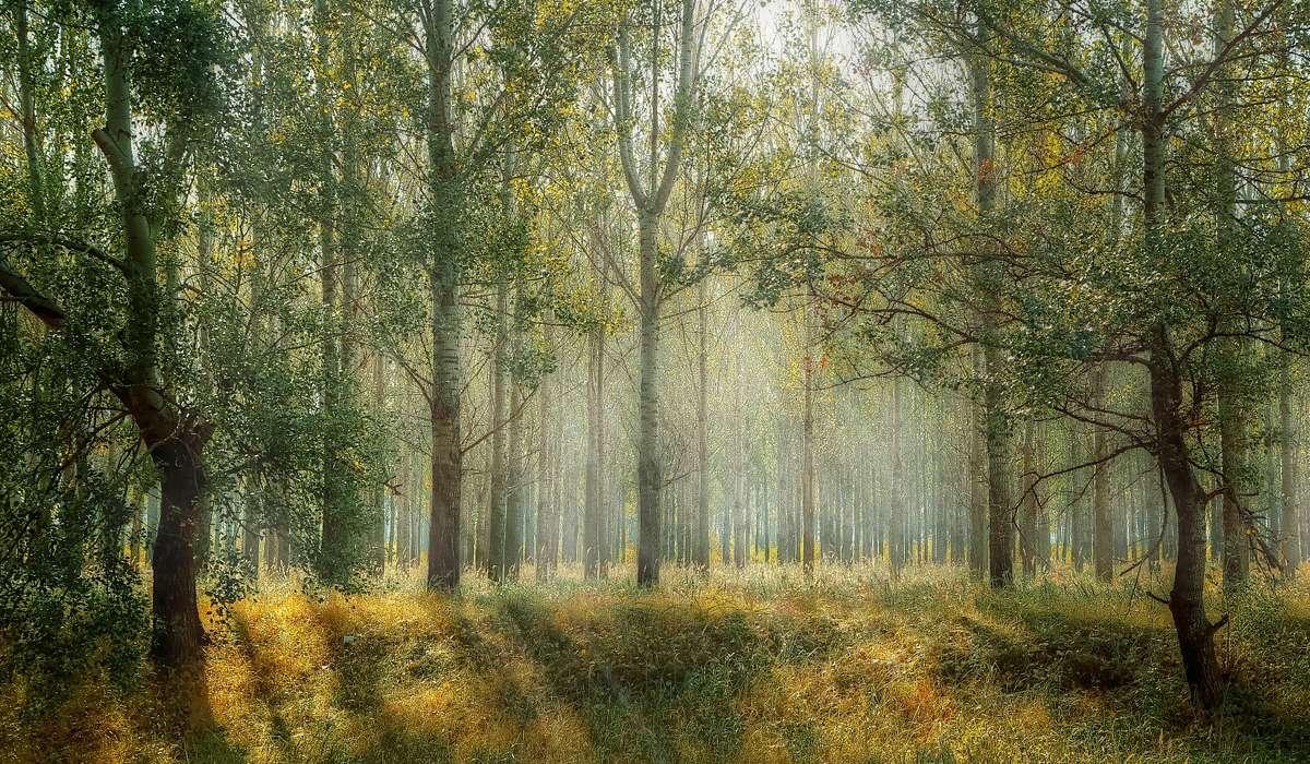 Quale periodo è stato caratterizzato dal predominio di piante terrestri vascolari?