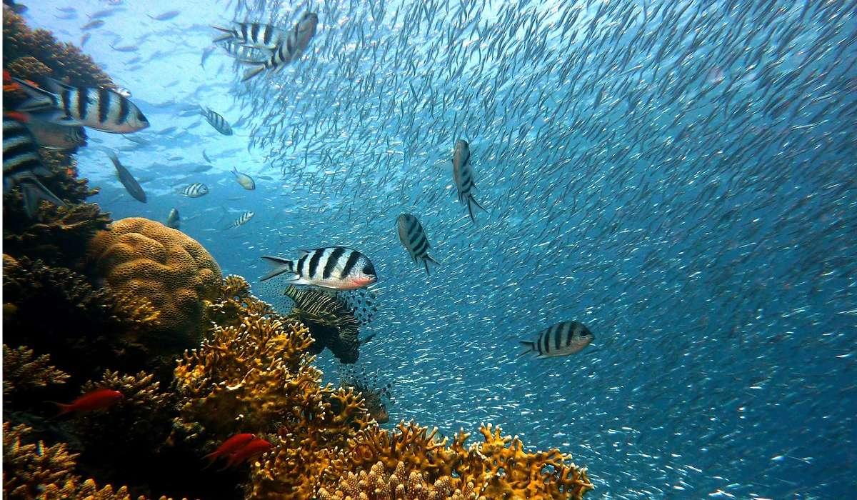 L'età dei pesci si è verificata durante quale intervallo?