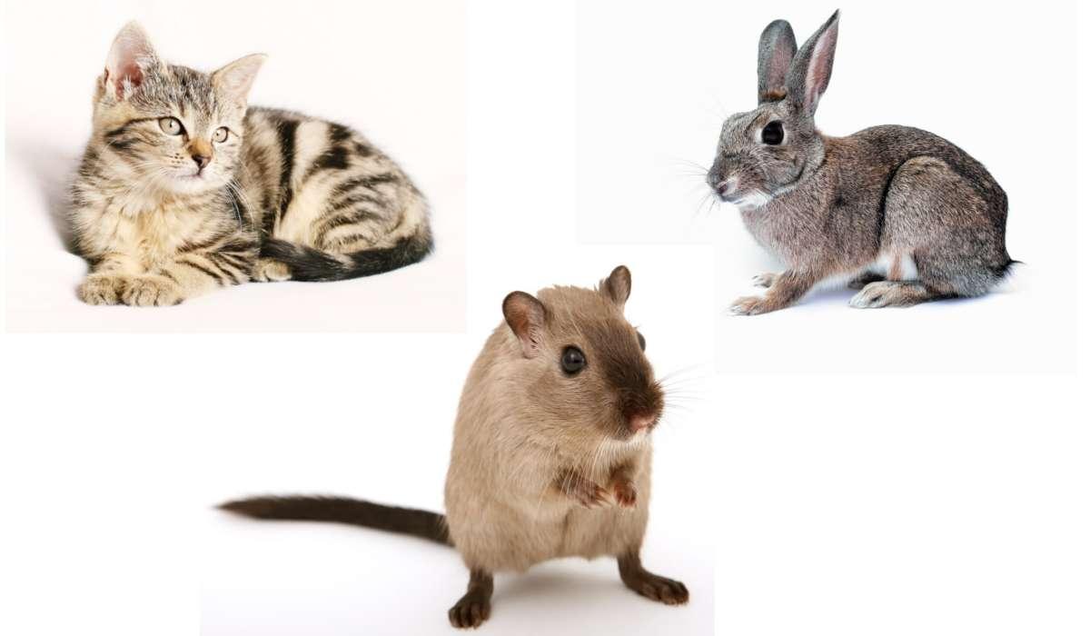 Quali animali sono stati utilizzati principalmente in