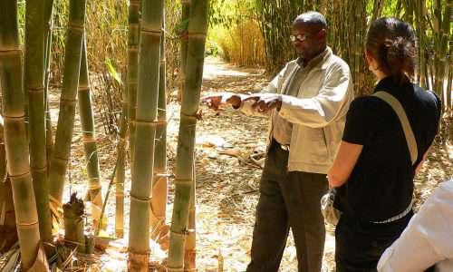 Il bamboo è una pianta straordinaria ricca di proprietà utilizzata anche per i mezzi di locomozione come la bamboo bike.