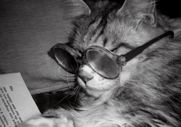 chi ama i gatti è più intelligente.