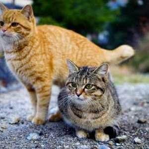 Il profilo psicologico di un amante dei cani è maggiormente predisposto all'estroversione e socialità di quello di un appassionato di gatti.