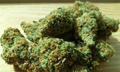 La marijuana italiana potrebbe essere utilizzata sempre più frequentemente a scopo terapeutico.