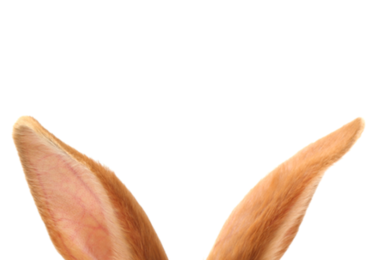 Animali-orecchie-indovinello