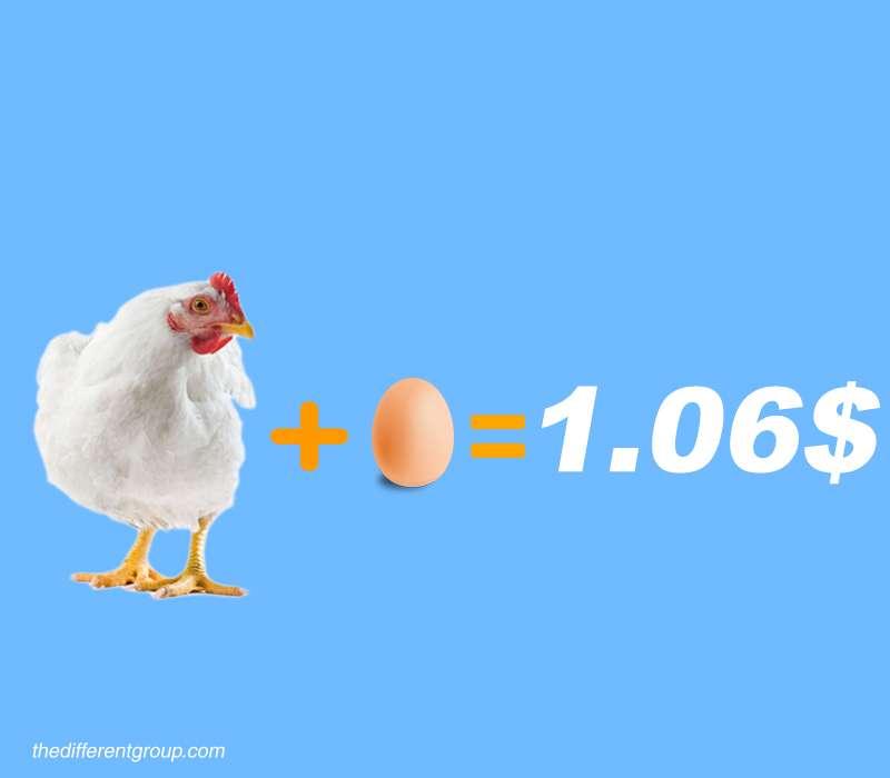 gallina-costo-uovo