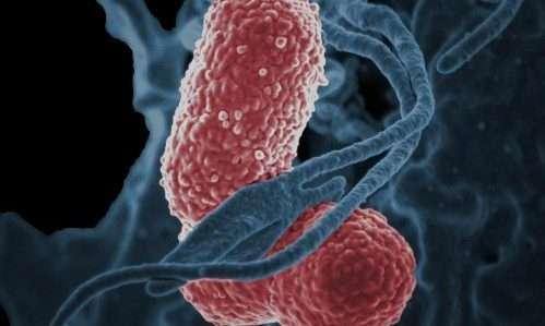 Anche i nostri animali domestici potrebbero diventare veicolo del batterio Klebsiella, uno dei più noti superbatteri.