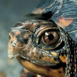 animali-tartaruga-curiosita
