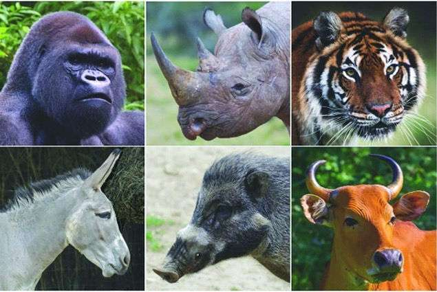 grandi animali