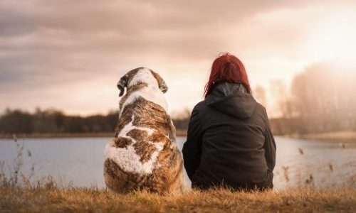 Gli animali domestici che affiancano pazienti immunodepressi o sempicemente debilitati dalla malattia portebbero diventare un pericolo se portatori ignari di superbatteri.