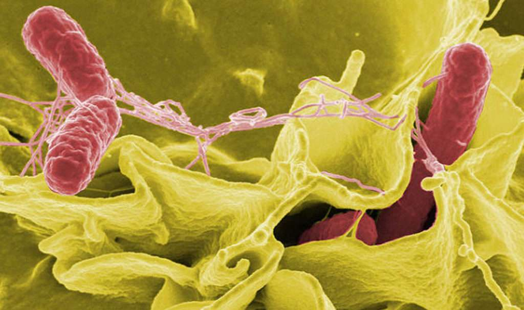 Superbatteri visti al microscopio