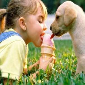 Gli animali domestici che tanto amiamo rischiano di diventare veicoli inconsapevoli di superbatteri resistenti agli antibiotici.