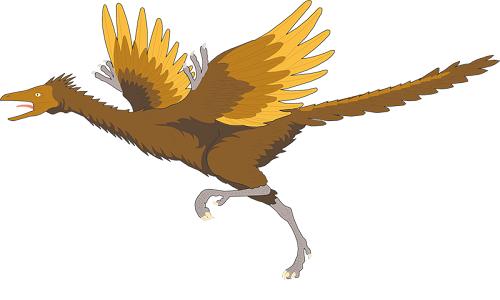 Rappresentazione illustrativa di un esemplare di Archeopetrix.