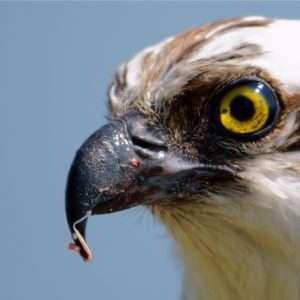 archeopteryx-becco-evoluzione-animali-uccelli