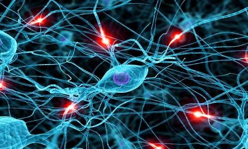 Sono circa 86 miliardi i neuroni del nostro sistema nervoso