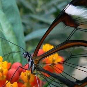 farfalle-trasparenti-ali-vetro