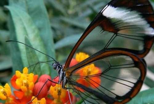 farfalla-ali-vetro