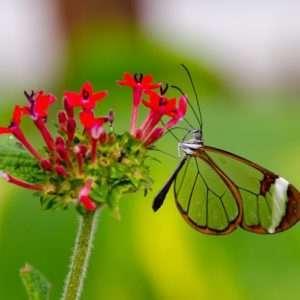 farfalle trasparenti-ali-vetro.jpg