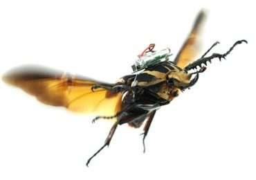 insetti-droni