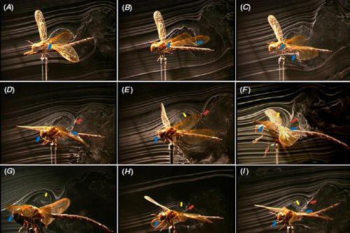 insetti droni natura-tecnologia