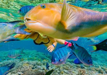 Choerodon-schoenleinii-turkfish-animali-usare-oggetti