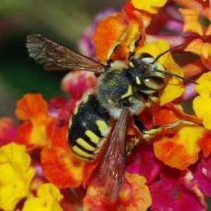 api felici zucchero