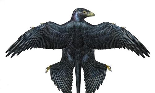 Il colore dei dinosauri poteva essere spesso iridescente, come mostrato nell'immagine