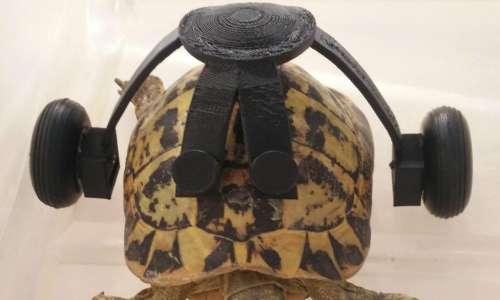 uga-tartaruga-sedia-a-rotelle