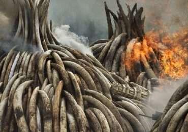 zanne di fuoco nairobi
