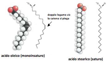 lipidi-vegetali-imagine-2