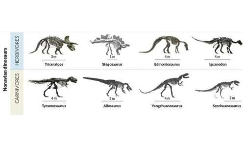 La dieta influenza il tipo di cavità addominale: dinosauri