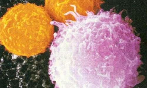 La luce del sole stimola i linfociti T ad accorrere più velocemente verso il sito di infezione/danno
