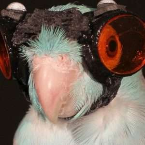 Obi è l'uccello pilota di cui i ricercatori si sono serviti per approfondire lo studio sulle dinamiche fisiche del volo