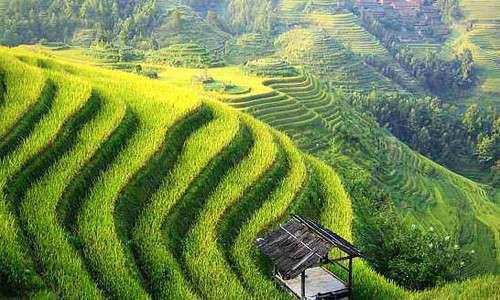 Le contee analizzate in The China study sono state scelte in modo da ridurre quanto più possibile le variabili nella raccolta dei dati riguardanti lo stile di vita.