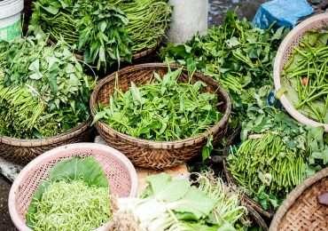 Caseina e proteine di origine animale sono dannose alla salute secondo quanto affermato nel libro The China Study